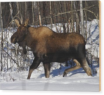 Wood Print featuring the photograph Snow Moose by Doug Lloyd