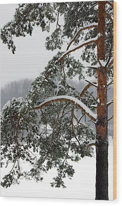 Wood Print featuring the photograph Snow Pine by Michelle Joseph-Long