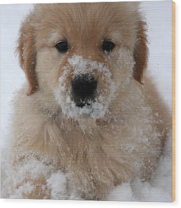 Snow Puppy Wood Print