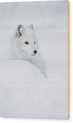 Snow Queen Wood Print by Andy Astbury