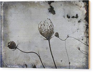 Snow Seeds Wood Print by Paul Grand