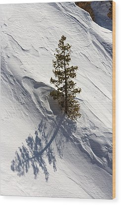 Wood Print featuring the photograph Snow Shadow by Karen Lee Ensley