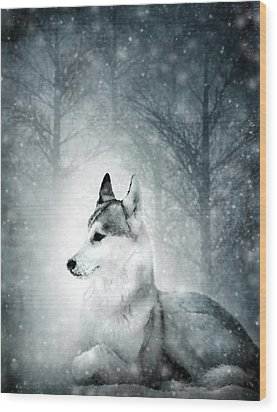 Snow Wolf Wood Print by Svetlana Sewell