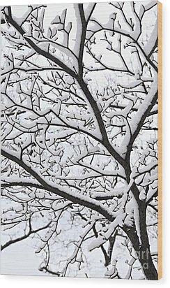 Snowy Branch Wood Print by Elena Elisseeva