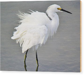 Snowy Egret All Fluffed Up Wood Print by Paulette Thomas