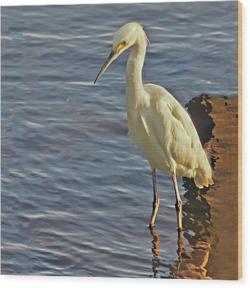 Snowy Egret At Sunrise Wood Print by Sandra Anderson