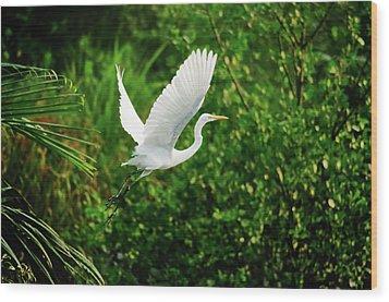 Snowy Egret Bird Wood Print by Shahnewaz Karim