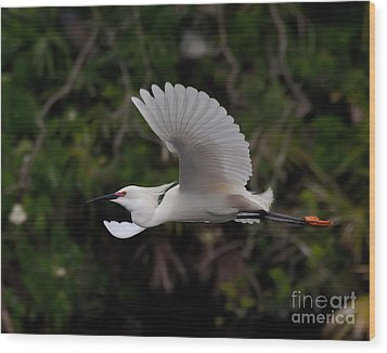 Snowy Egret In Flight Wood Print
