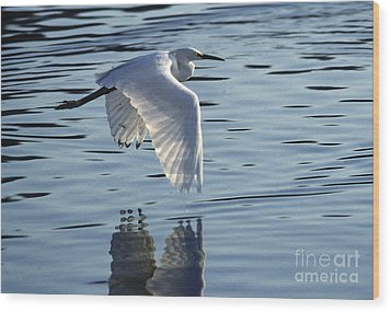Wood Print featuring the photograph Snowy Egret In Flight by Craig Lovell