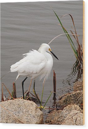 Wood Print featuring the photograph Snowy Egret by Kay Lovingood