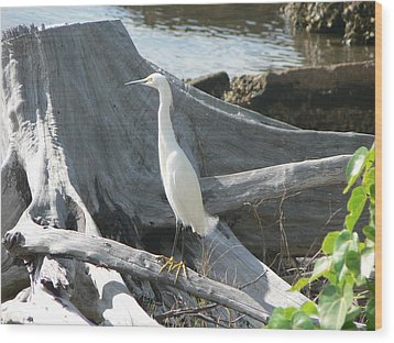 Wood Print featuring the photograph Snowy Egret by Laurel Best