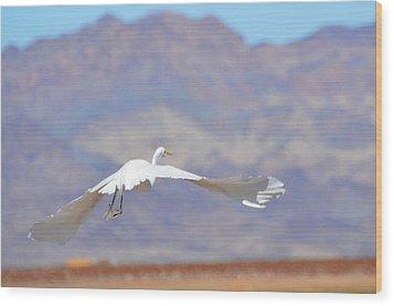 Snowy Egret Wood Print by Linda Larson