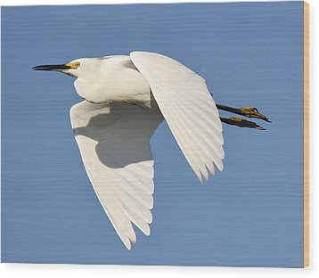 Snowy Egret Wood Print by Paulette Thomas