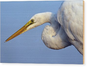 Wood Print featuring the photograph Snowy Egret Ready by Darleen Stry