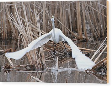 Wood Print featuring the photograph Snowy Egret Takeoff by Mark J Seefeldt