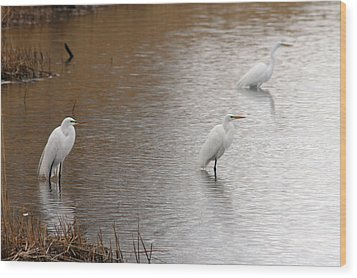 Wood Print featuring the photograph Snowy Egret Trio by Mark J Seefeldt