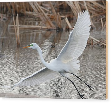 Wood Print featuring the photograph Snowy Egret Wingspan by Mark J Seefeldt