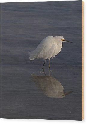 Snowy Egret With Reflection Wood Print