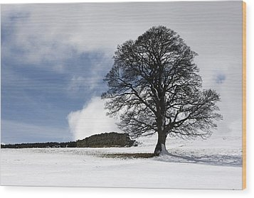 Snowy Field And Tree Wood Print by John Short