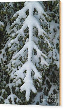 Snowy Fir Tree Wood Print by Sami Sarkis