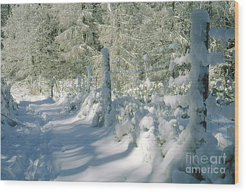 Snowy Footpath In Winter Wonderland Wood Print by Heiko Koehrer-Wagner