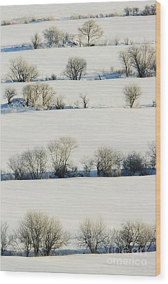 Snowy Landscape Wood Print by Jeremy Woodhouse