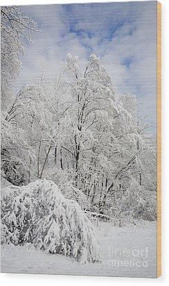 Snowy Landscape Wood Print by Len Rue Jr and Photo Researchers