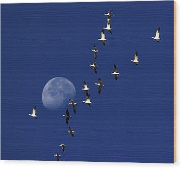 Snowy Moon Wood Print by Tony Beck