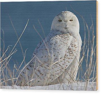 Snowy Owl Profile Wood Print