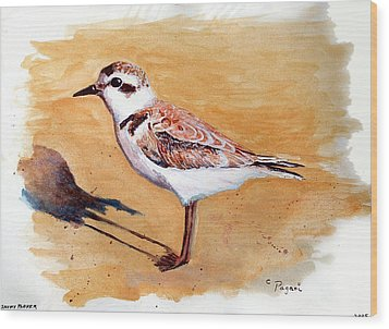 Snowy Plover Wood Print by Chriss Pagani