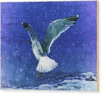 Snowy Seagull Wood Print by Debra  Miller