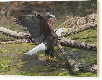 Wood Print featuring the photograph Soaring Eagle by Elizabeth Winter