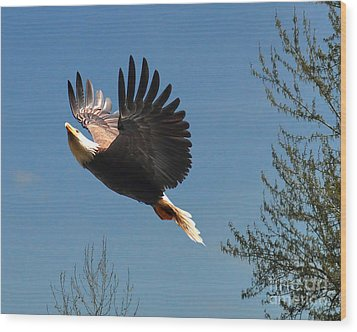 Wood Print featuring the photograph Soaring by Jack Moskovita