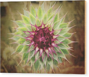Soft As A Thistle Wood Print by Amy Tyler