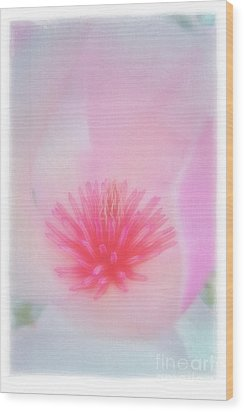 Soft Magnolia Wood Print by Judi Bagwell