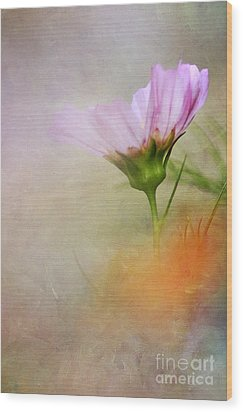 Soft Pastels Wood Print by Darren Fisher