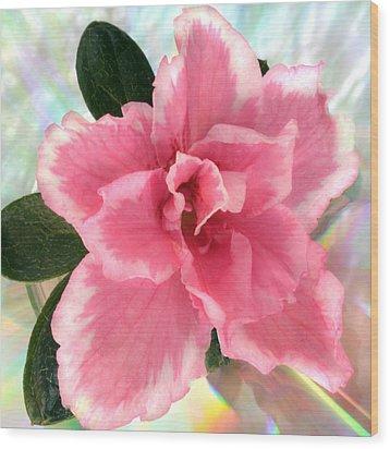 Soft Pink Azalea Wood Print by Terence Davis