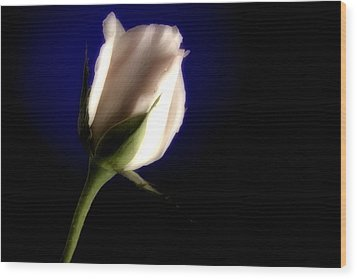 Soft Pink Rose Blue Background Wood Print by M K  Miller
