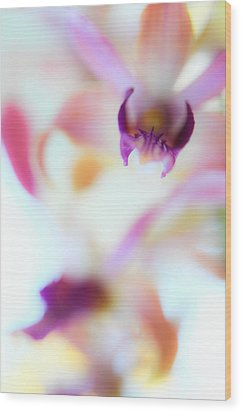 Soft Seduction. Orchids Wood Print by Jenny Rainbow