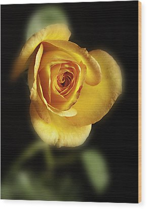 Soft Yellow Rose On Black Wood Print by M K  Miller
