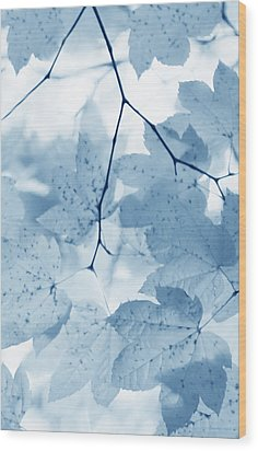 Softness Of Blue Leaves Wood Print by Jennie Marie Schell