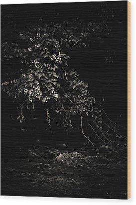Solace Wood Print by Jessica Brawley