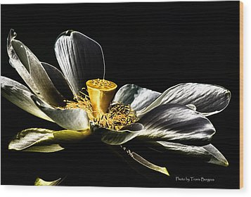 Wood Print featuring the photograph Solarized Lotus A by Travis Burgess