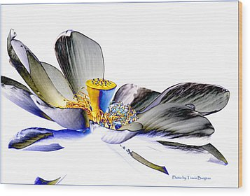 Wood Print featuring the photograph Solarized Lotus C by Travis Burgess