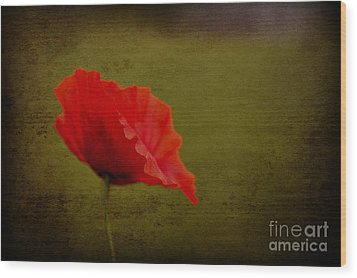 Wood Print featuring the photograph Solitary Poppy. by Clare Bambers