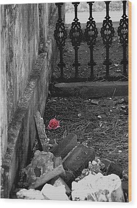 Solitary Rose Wood Print by Renee Barnes