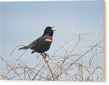 Song Of A Red-winged Blackbird Wood Print by Ellie Teramoto