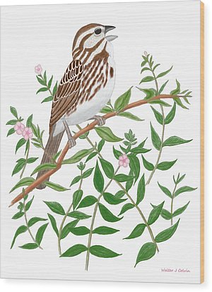 Wood Print featuring the digital art Song Sparrow by Walter Colvin