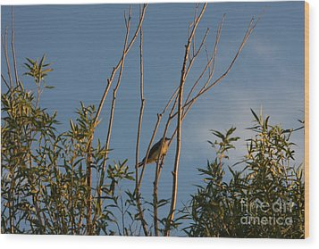 Wood Print featuring the photograph Songbird by Marta Alfred