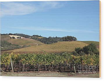 Sonoma Vineyards - Sonoma California - 5d19309 Wood Print by Wingsdomain Art and Photography